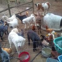 Our Farm Life