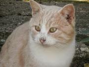 Γερό Γάτος