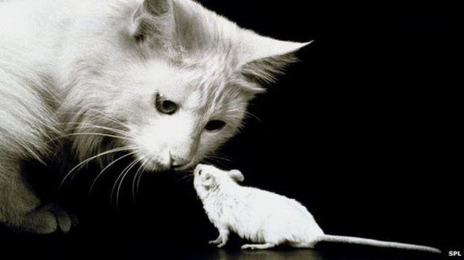 El todopoderoso el arma secreta de los gatos para cazar - Como atrapar ratones ...