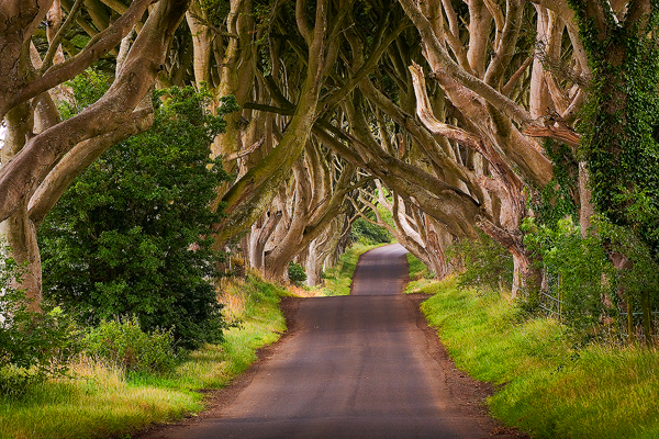 The Dark Hedges | Best Place For Photography | Travel And