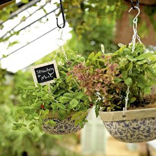 wiszące zioła