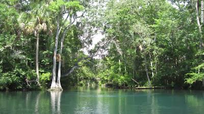 Florida spring yields 'amazing' artifacts