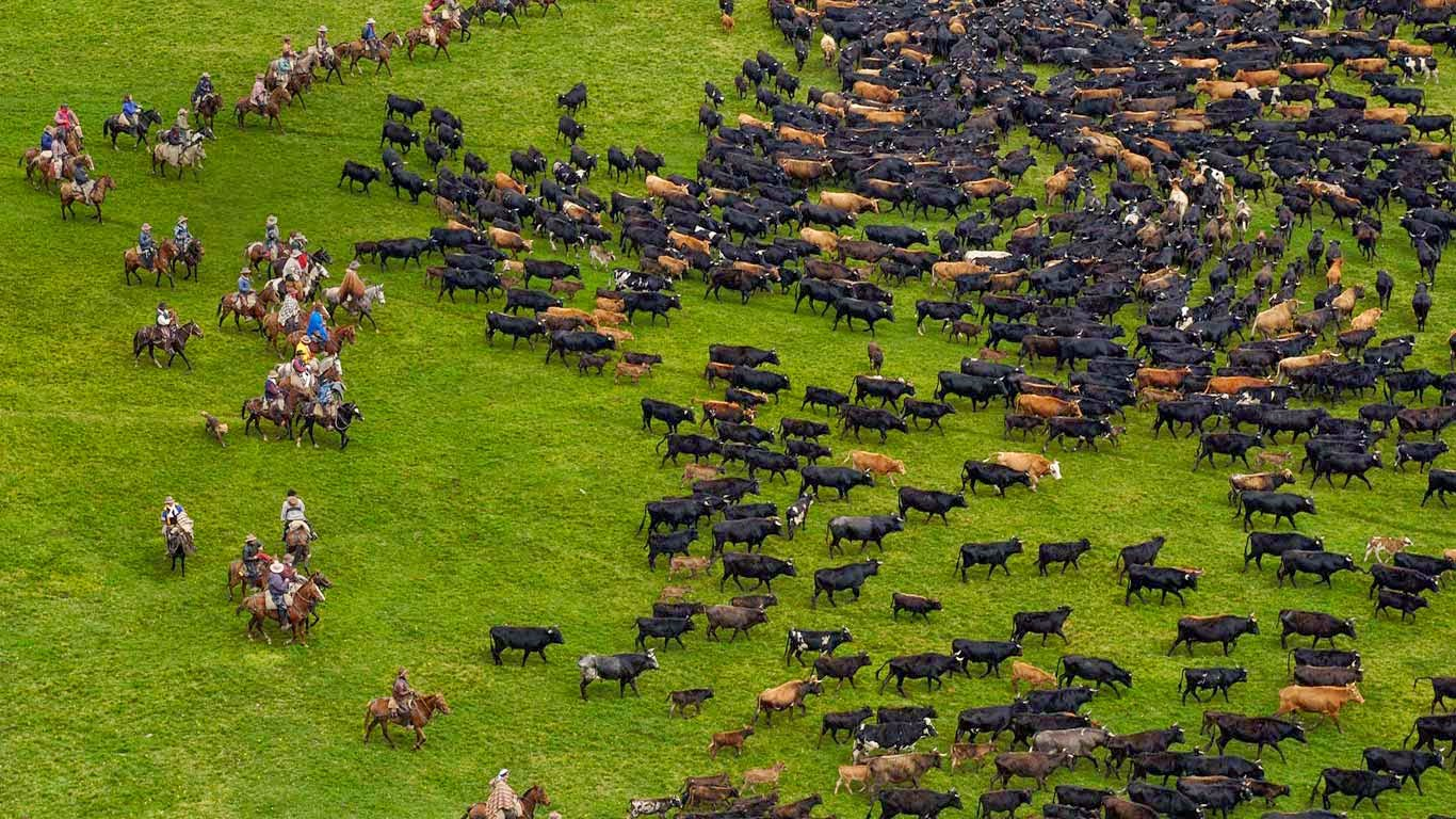 Cattle during an annual overnight round-up, Andes Mountains, Ecuador (© Pete Oxford/Minden Pictures/Corbis) 159