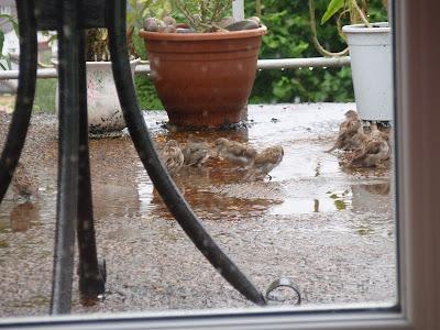 Happy sparrows 2