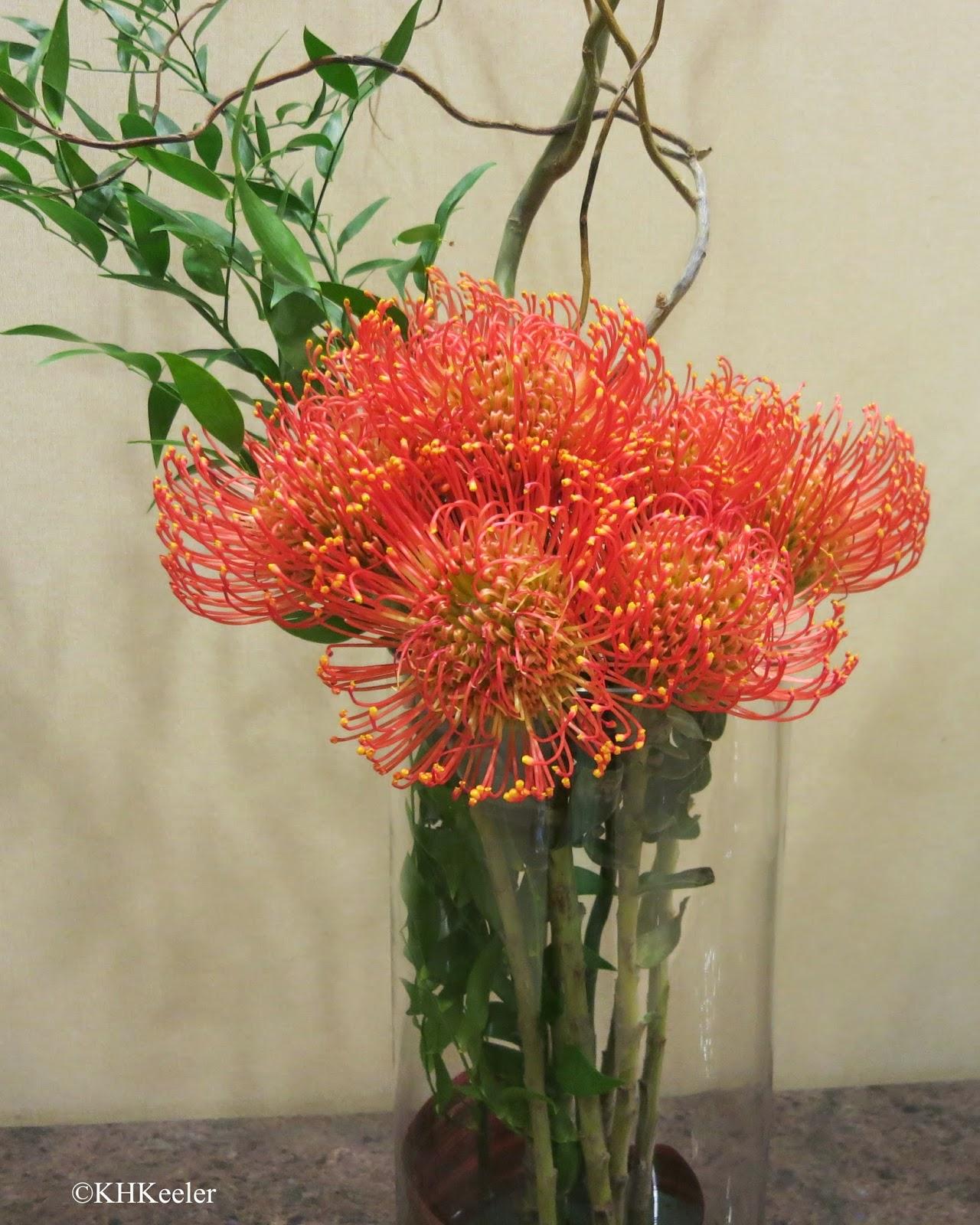 Proteaceae, Seattle