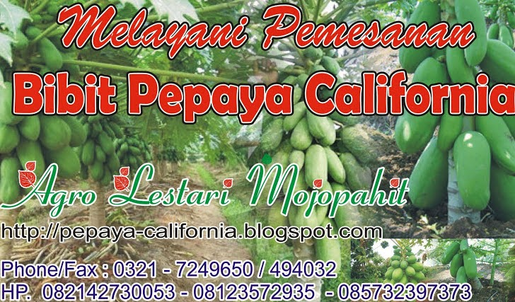 PEPAYA CALIFORNIA