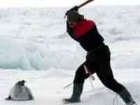 seal hunting in Canada