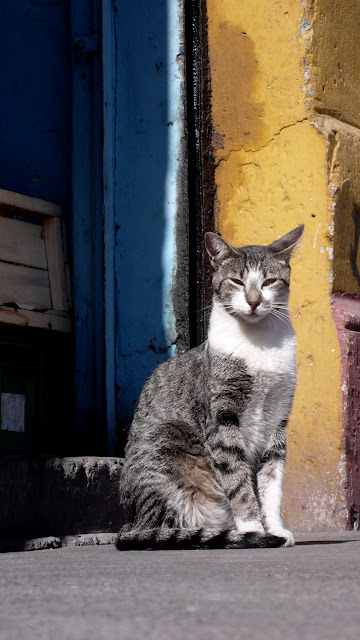 cat of santiago de chile