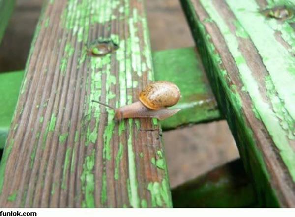 bloggermalaz.blogspot.com - Bagi Yg Mental Krupuk Lihatlah Gambar Ini Sebelum Menyerah!