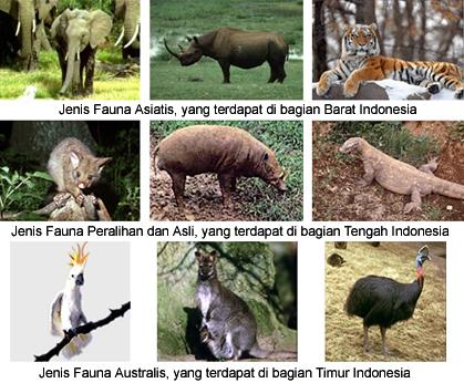 ... jenis hewan seperti kera kuskus babi rusa anoa dan