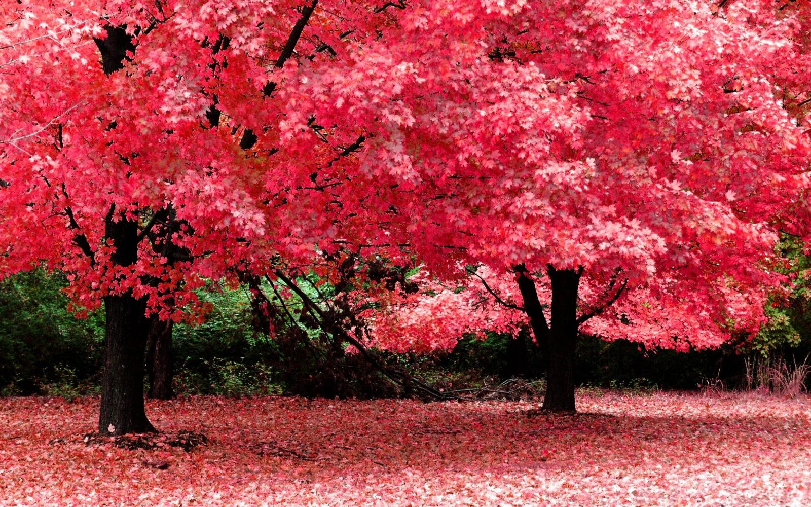 http://4.bp.blogspot.com/-falNq6OZULw/TsvIs0fRPpI/AAAAAAAAK_E/K7B82aaiZCc/s1600/beautiful+nature+wallpaper+hd+widescreen.jpg
