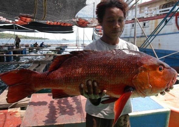 Hasil tangkapan nelayan di pantai bira
