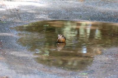 woodcock driveway birdbath 1