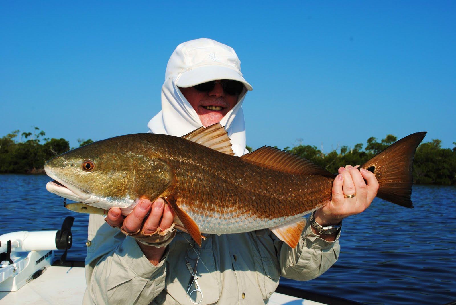 The pine island angler matlacha fishing report redfish for Pine island fishing charters