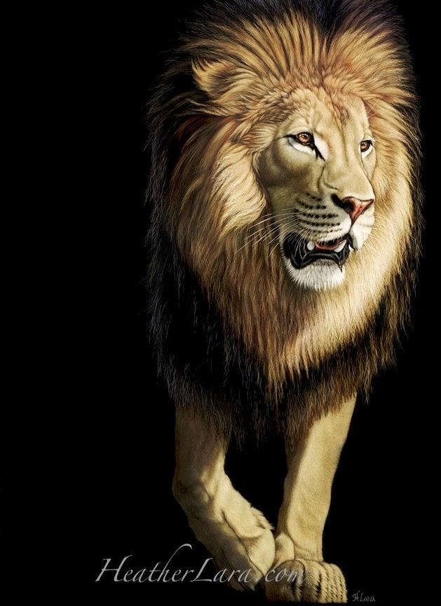 09-Lion-Heather-Lara-Hyper-realistic-Animal-Scratchboard-Drawings-Wildlife-www-designstack-co