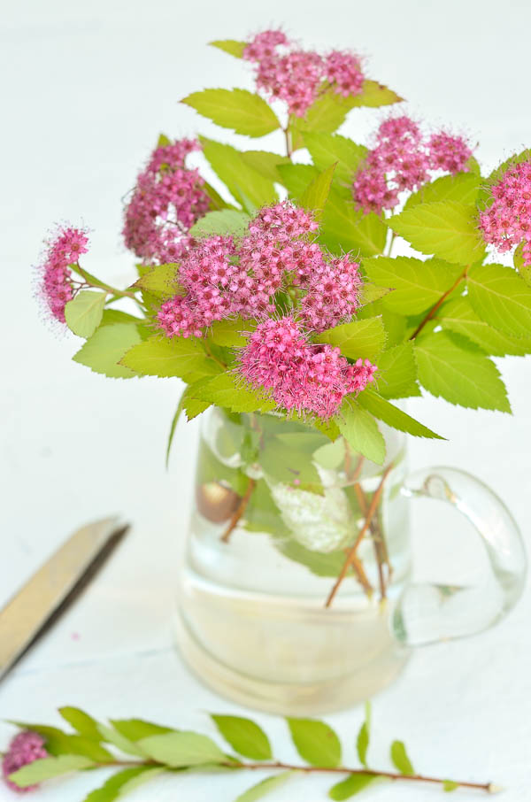Simple summer flower arrangement made by cutting branches from a spirea bush.  |  www.andersonandgrant.com