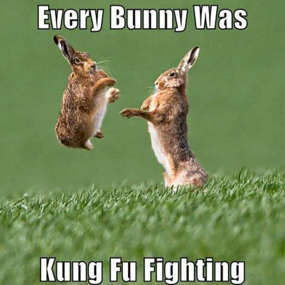 [Image: kung%2Bfu%2Bfighting.jpg]