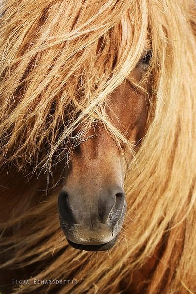 beautiful horse photos