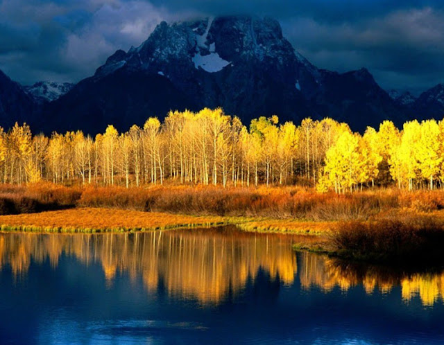 The Simple Beauty Of Nature: Quaking Aspen Mount Moran Grand Tetons Woming