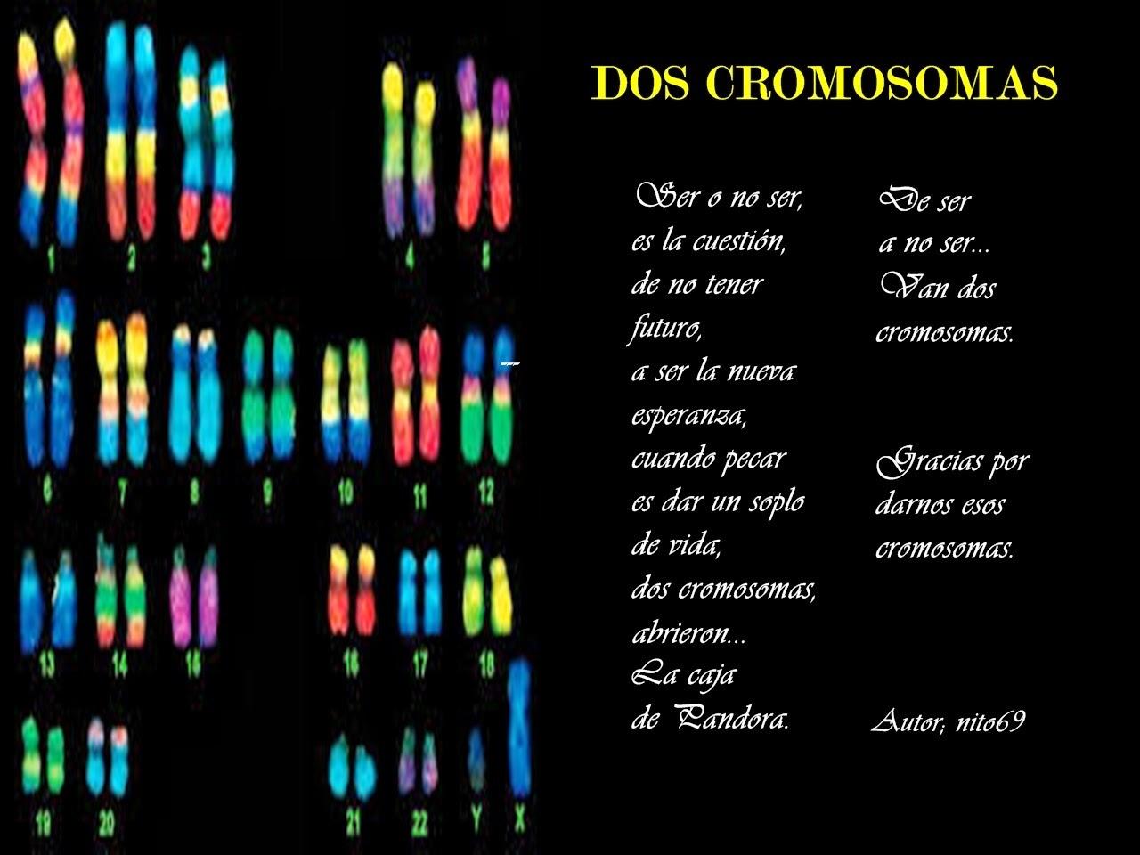 DOS CROMOSOMAS