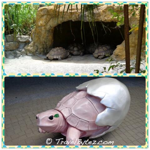 Taipei Zoo tortoises