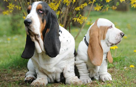 Moschino Pets