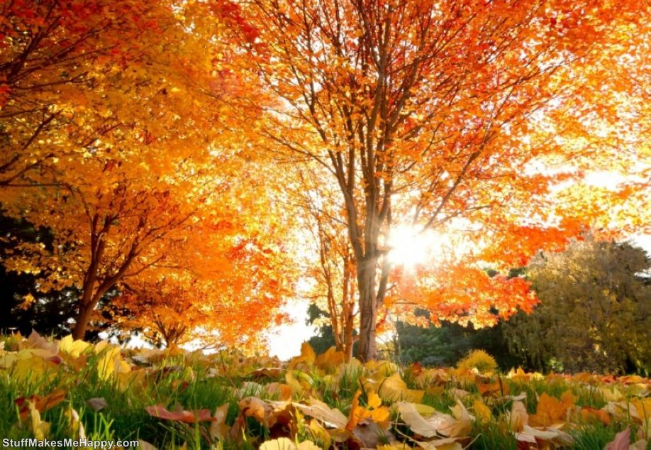 Beautiful Autumn Pictures - Autumn Wallpapers