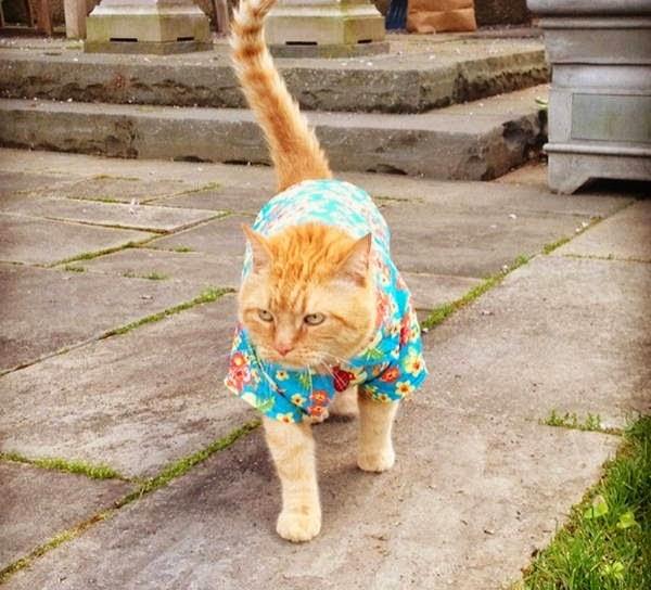 Funny cats - part 108 (40 pics + 10 gifs), cute cats, cat pics