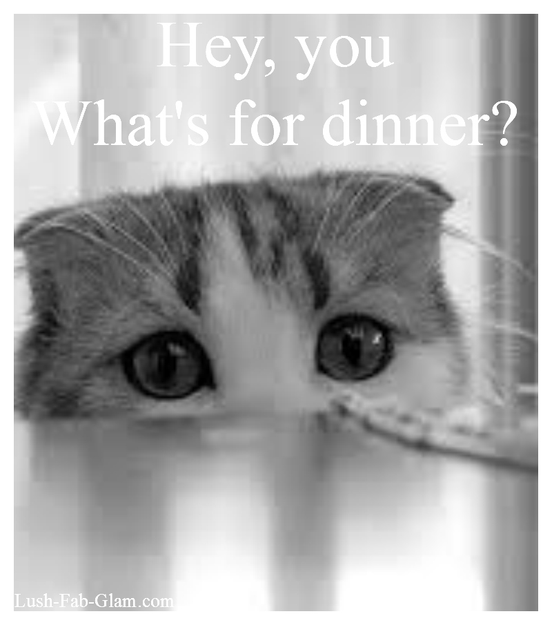 http://www.lush-fab-glam.com/2014/08/wow-your-kitty-with-an-irresistible-meal.html