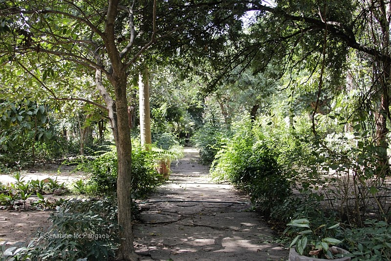 The Bakau botanical Garden in the Gambia