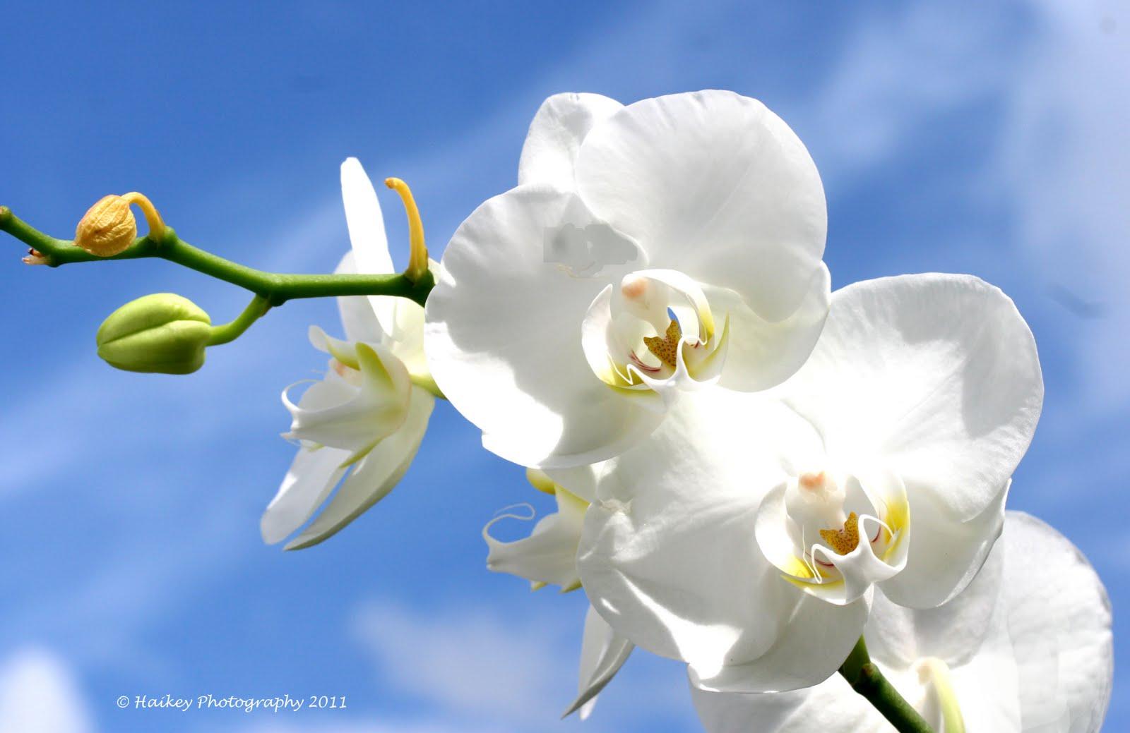 http://4.bp.blogspot.com/-fe0Nn6g9Kgc/Tc_VoQr6ROI/AAAAAAAACNA/HmmaXdE0Pcg/s1600/orchidee4.jpg