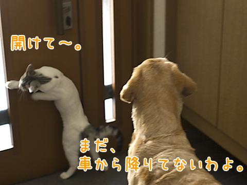 玄関で出迎える犬と子猫