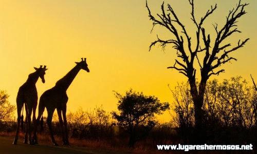 Recorre los increíbles parques y playas de Sudafrica