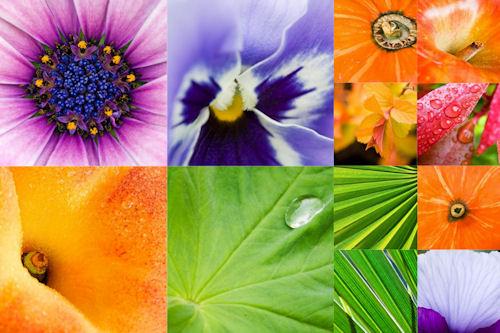 Colección de plantas, frutas y flores (12 imágenes clos up)