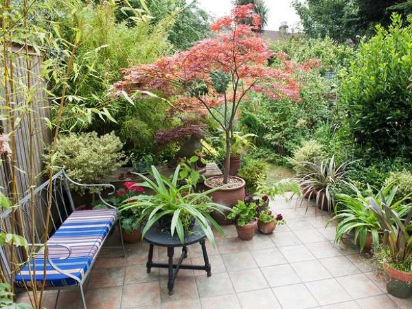 Plantar en contenedores con mucho estilo guia de jardin aprende a cuidar tu jard n - Tall trees for small spaces style ...
