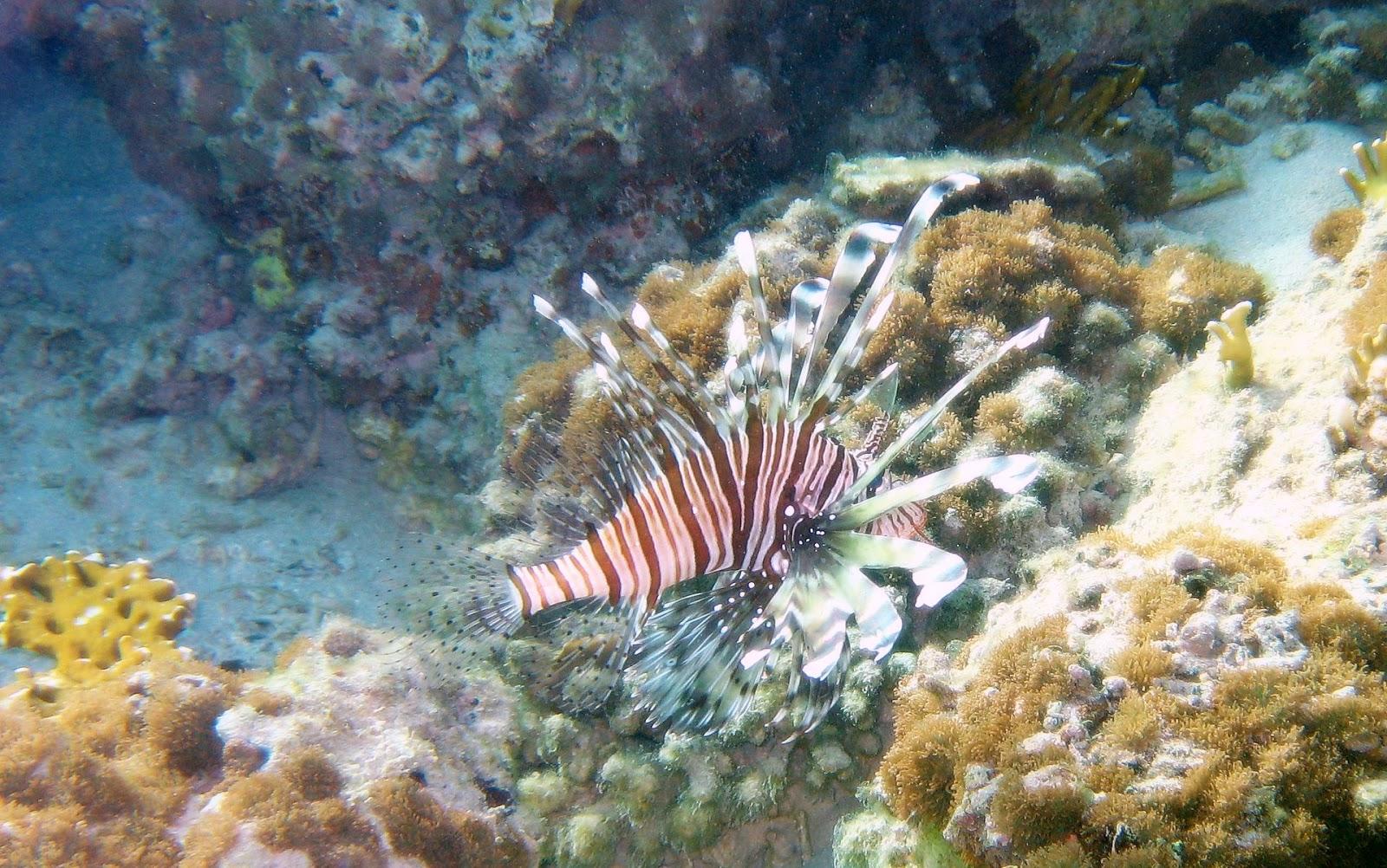 http://4.bp.blogspot.com/-feL1HZNC25w/UH1HlqQ1sDI/AAAAAAAAEXo/olASls5TxHU/s1600/liofinsh-underwater-ocean-wallpaper-1920x1200-248.jpg