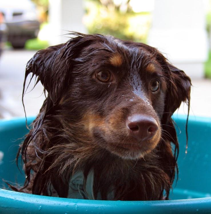 ahorrar, bañar perro en casa, ahorro