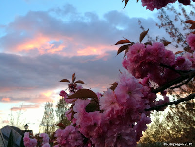 spring blossoms and sunset