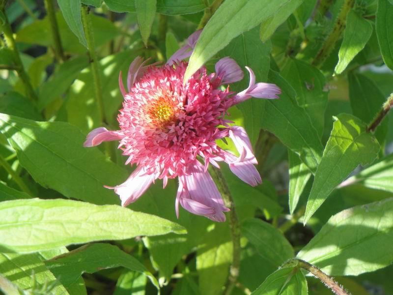 Cocoon garden commande promesse de fleurs for Promesse de fleurs