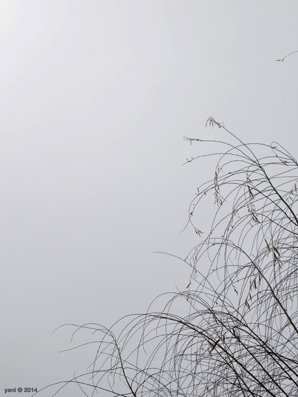 spirited by espionage gallery - misty branches