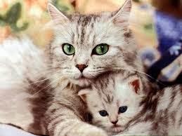 Mengapa Nabi Muhammad Sangat Sayang Terhadap Kucing?