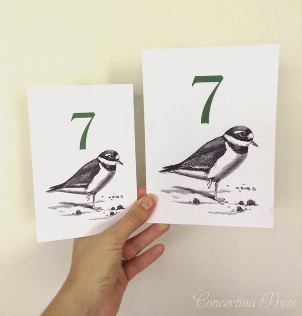 Ringed Plover Wedding Table Numbers