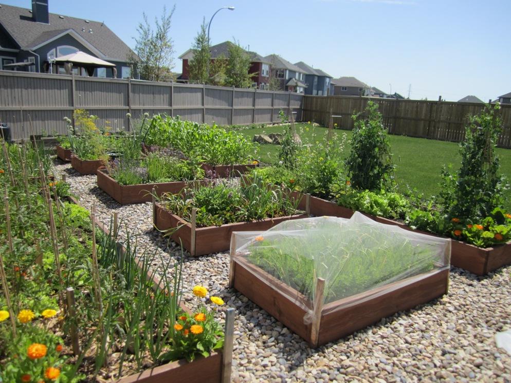 Family Adventures Vegetable Garden on July 2011