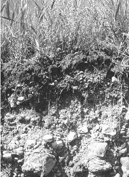 Horizon tanah. Gambaran tersebut diperoleh melalui pembuatan penampang atau profil tanah.