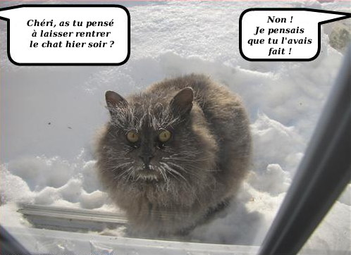 [Image: chat+rest%25C3%25A9+dehors.jpg]