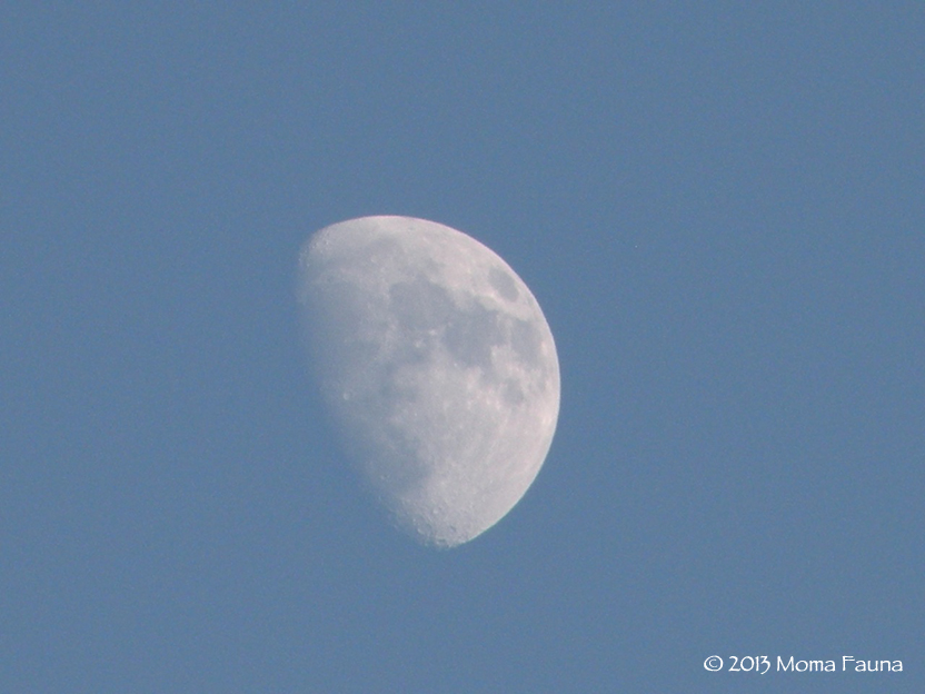 Waxing Moon in a sort-of-Spring sky.