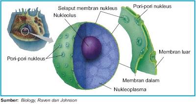 Struktur nukleus inti sel