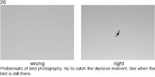 Совет 26. Проблема съемки птиц в полете - очень маленькие объекты, которые быстро перемещаются. Поэтому вам понадобится длиннофокусный объектив, терпение и выдержка, что бы получить достаточно приемлемый снимок.