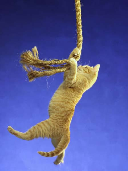 Cat Hanging On Rope Wallpaper Desktop HD