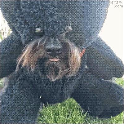 The eating teddy bear